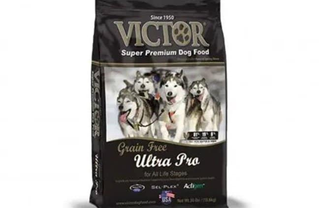 a premium dog food for your pet shiba inu