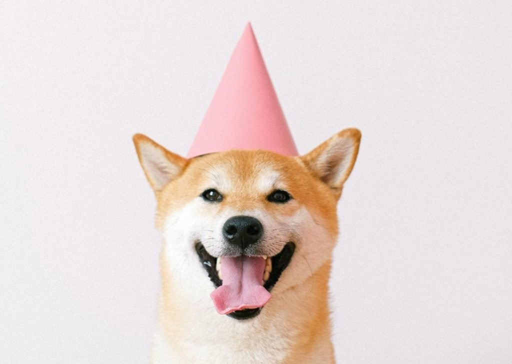 Shiba inu cheerful pose with party hat