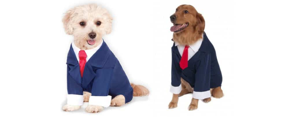 dog costume business suit