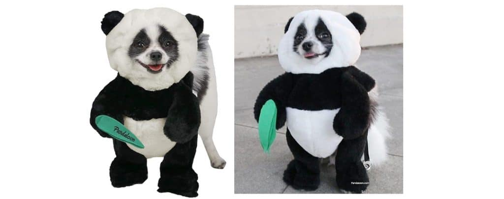 pandaloon dog costume