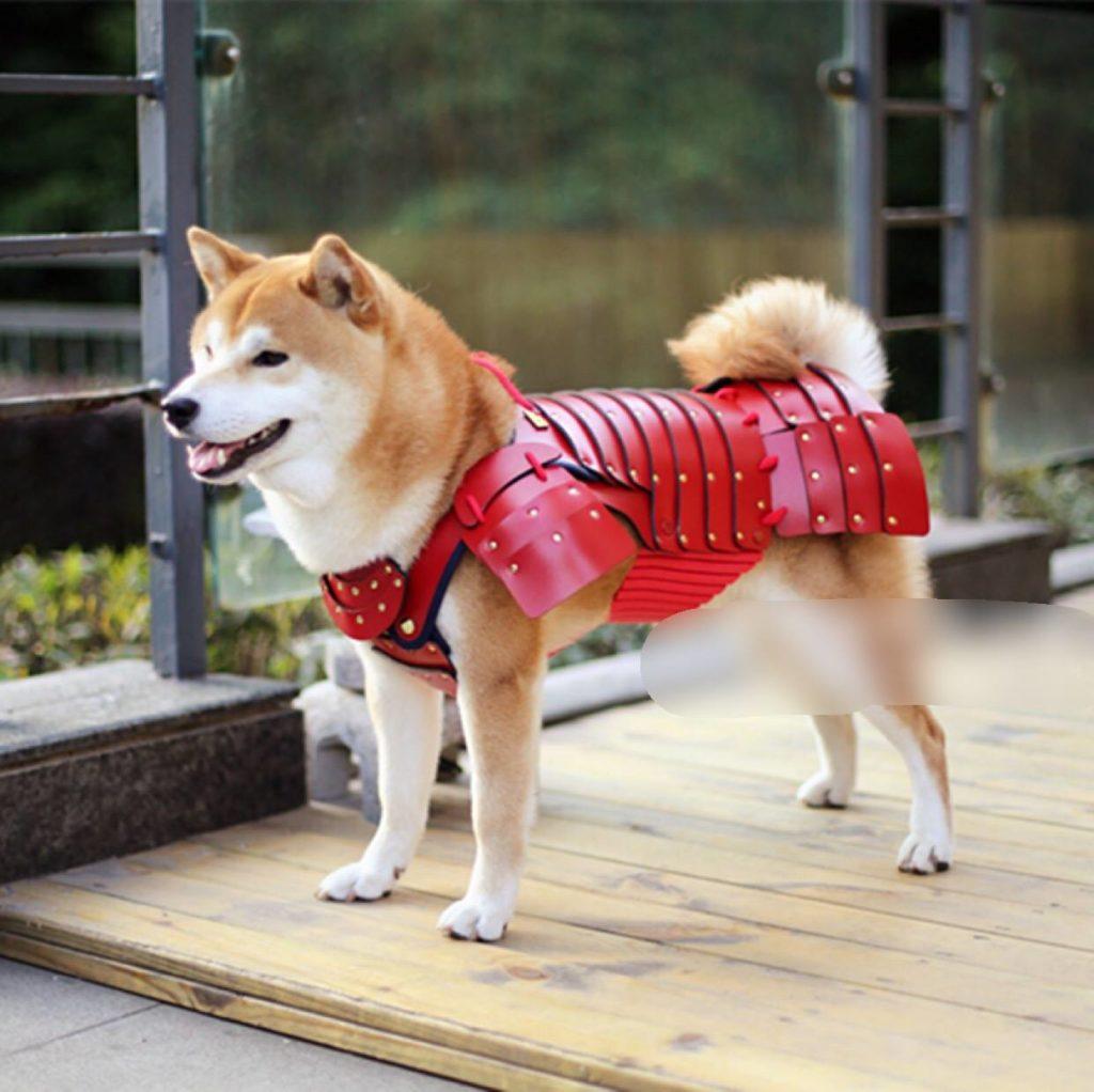 shiba inu dog costume