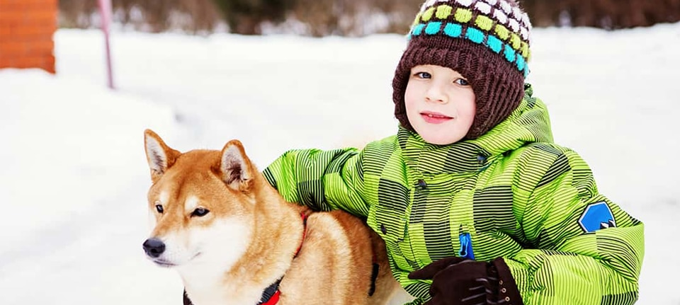 Is the Shiba Inu Breed Good for Kids?